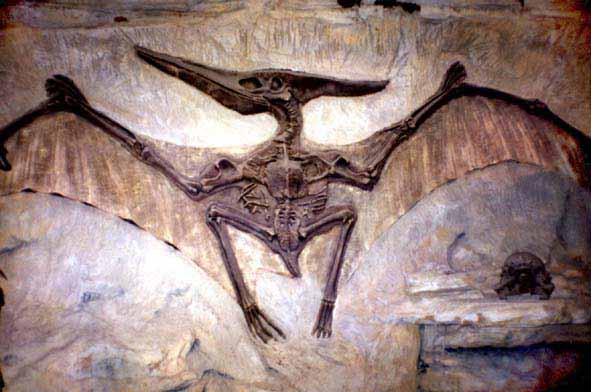 no es lo mismo - it s not the samePterodactyl Fossil